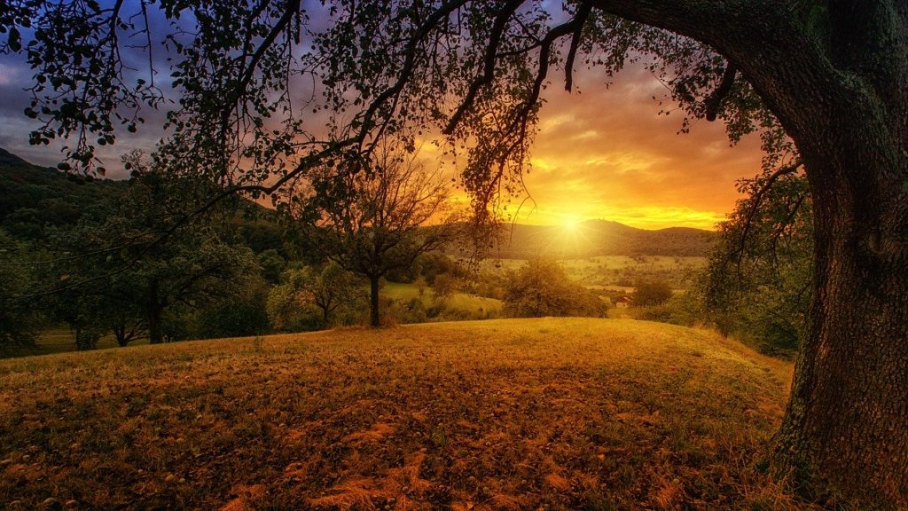 nature, tree, dawn