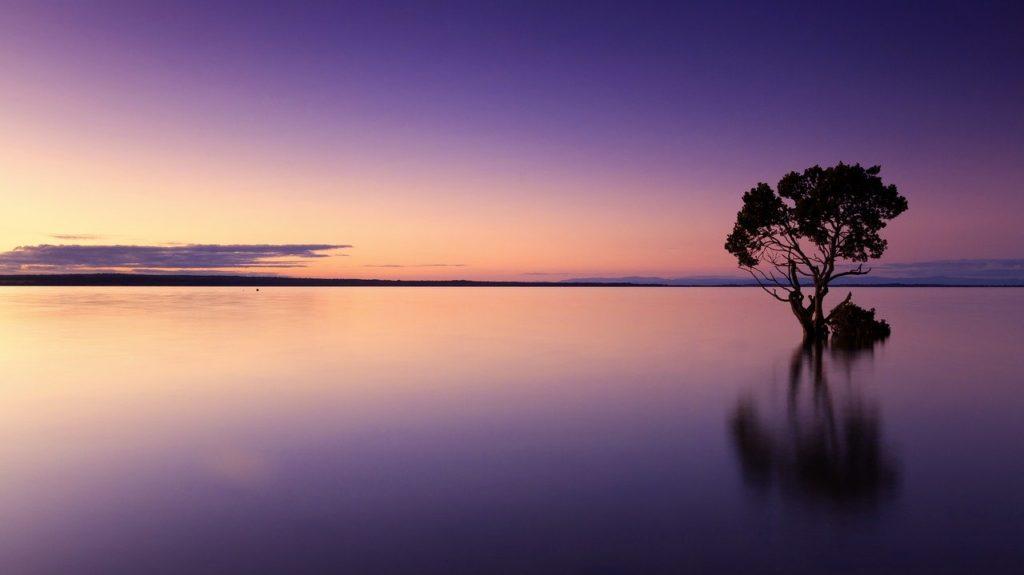 sunset, tree, water